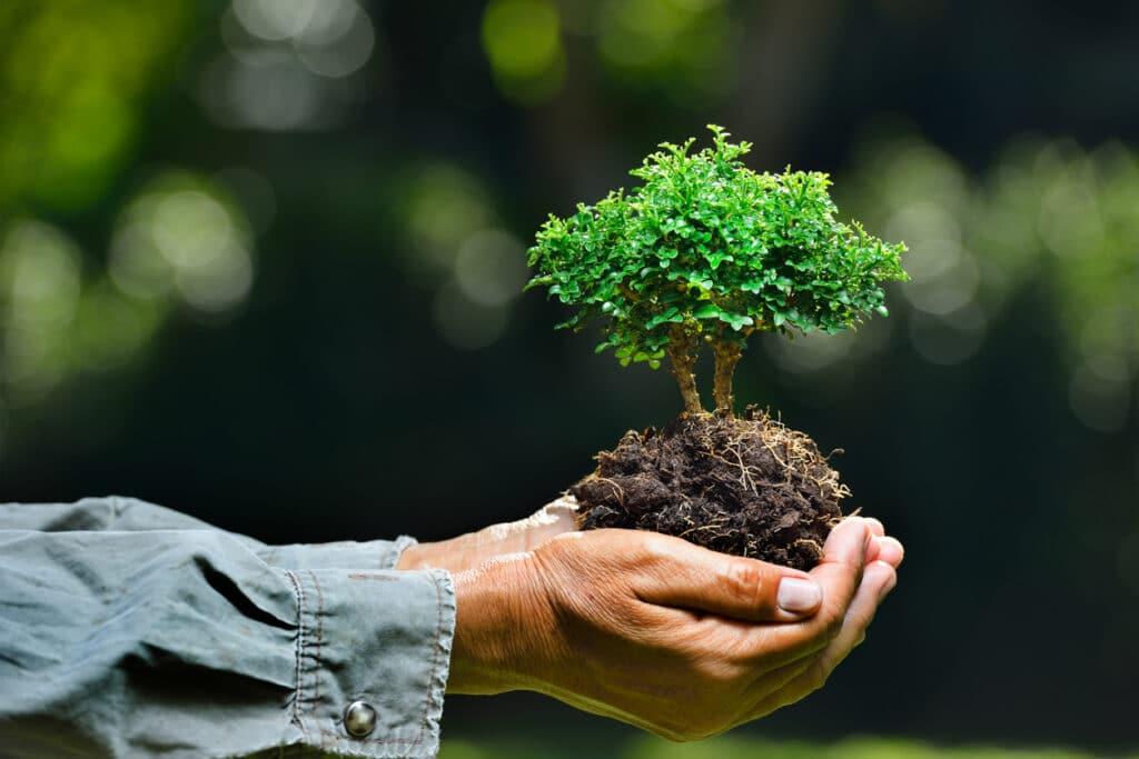 small bonsai plant in hand